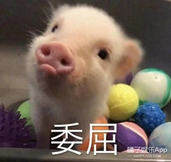猪猪女孩VS精致女孩,对待生活的一百种新姿势