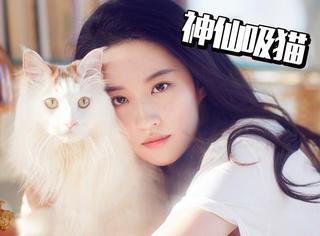 劉亦菲曾救助50多只流浪貓,想做神仙姐姐懷里的喵!