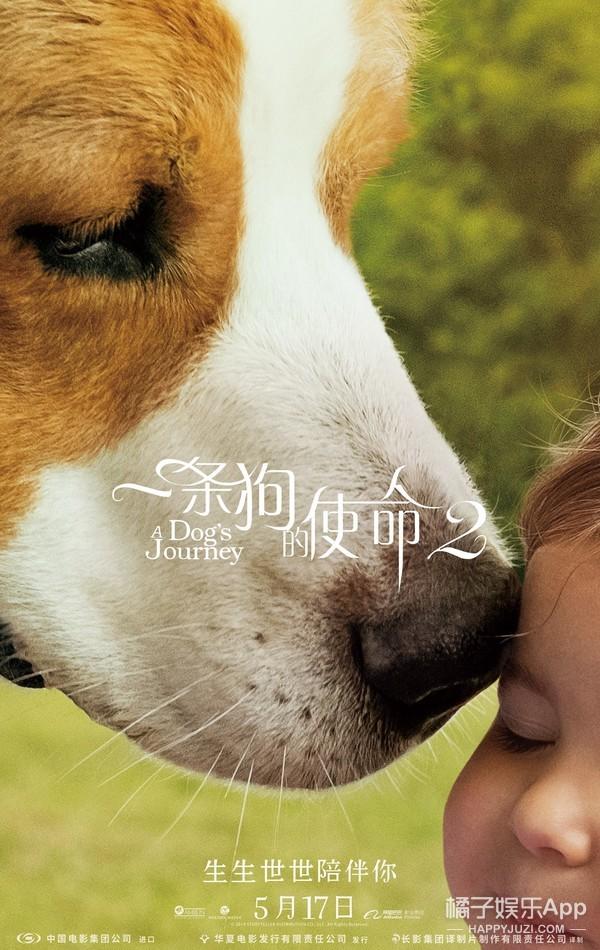 《一条狗的使命2》超前鉴赏,被赞今夏最强催泪弹!