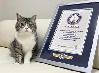 6亿播放量!世界上观看次数最多的猫长啥样?