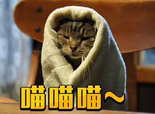 想要撸猫找不到地方?看完这几部电影保证你过瘾!