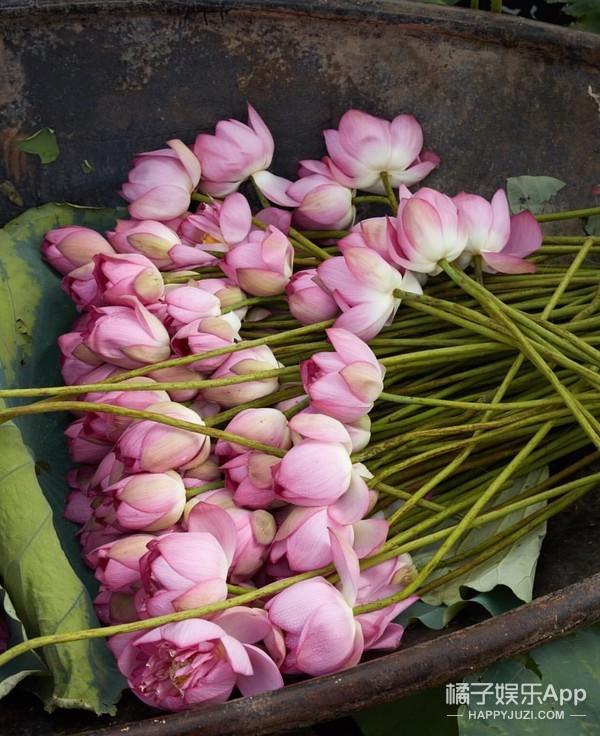 馥蕾诗玫瑰花瓣水上市,一阵玫瑰龙卷风吹来三里屯啦!