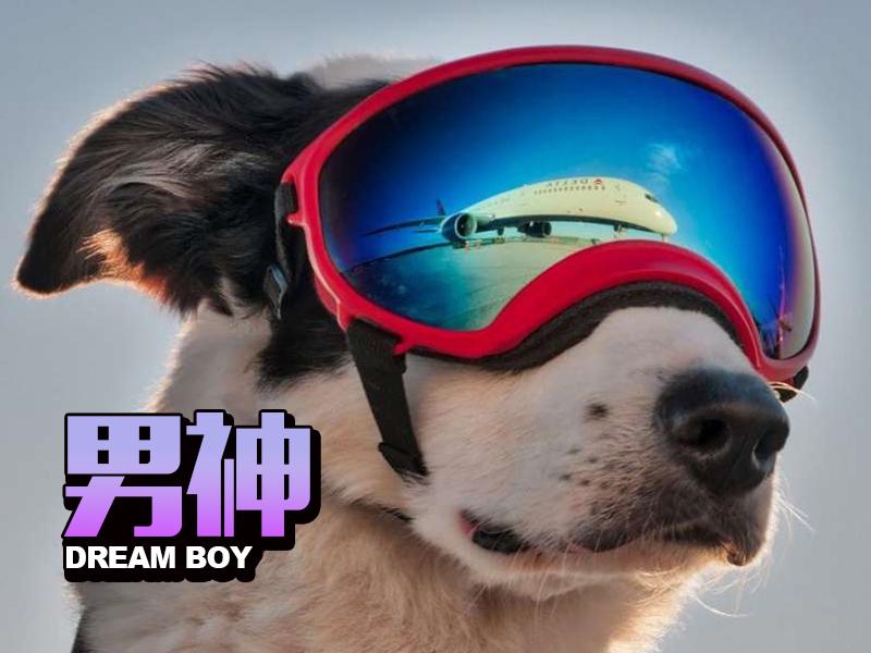 这只狗可能正在干着全世界最帅的工作