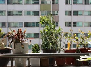 植物可以协助破案?