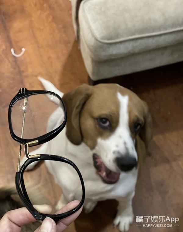 你好,不要养狗!