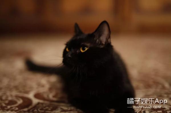 《妖猫传》里的白居易,为什么要说《长恨歌》不是他写的?