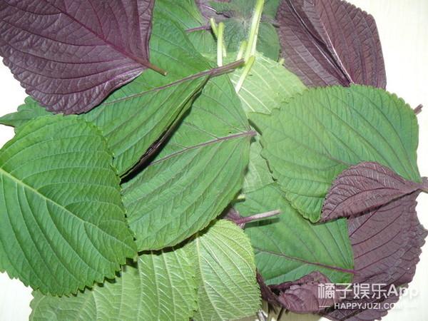 小小一片叶子竟然有如此神奇的作用,快来给你的肠胃清清油!