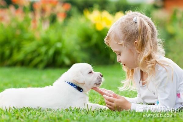 想让狗狗乖巧懂事,这几点一定不能忽略