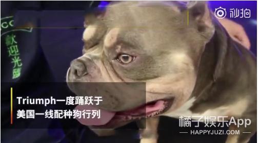 """价值348万的""""狗界爱马仕""""竟然长这样?"""