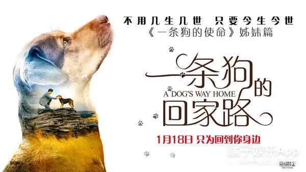 """《一条狗的回家路》定档1.18 马达现身为""""新欢""""代言"""