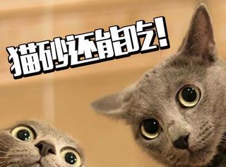 霓虹国美食界又被震惊了!这一次,他们竟然要吃猫咪粑粑!