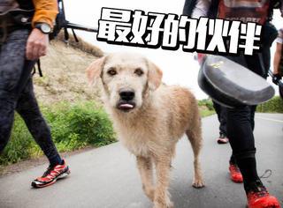 耐力赛上一饭之恩,流浪狗陪参赛者跋山涉水上百公里