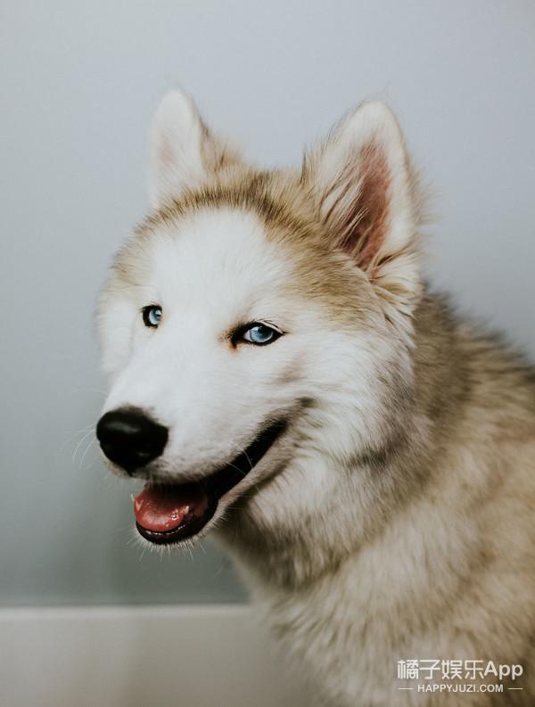 不想说再见,狗狗长寿的秘诀你知道吗?