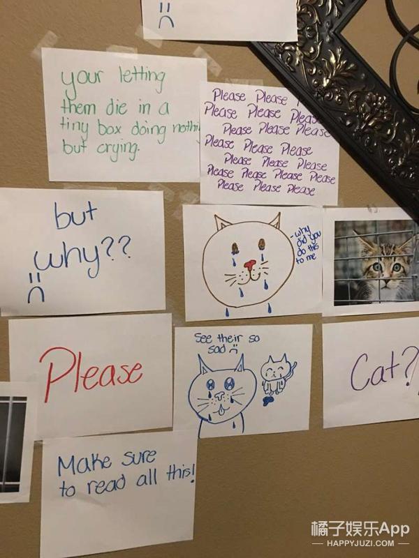 爸妈不让养猫怎么办?你可以学学这位姑娘