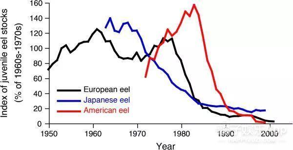 鳗鱼也被吃到濒危了?是物竞天择还是人类单方面屠杀