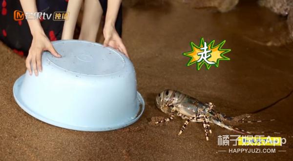 看不懂她邊吃蝦邊放生的圣母人設了...