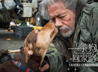 """《一条狗的回家路》曝中国风海报 首映被赞""""适合全人人类"""""""