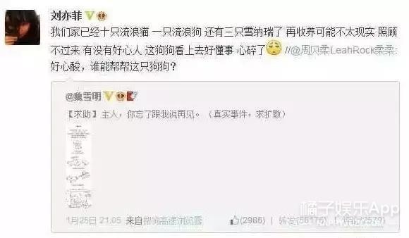 刘亦菲曾救助50多只流浪猫,想做神仙姐姐怀里的喵!