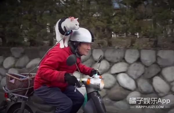 会骑摩托会按摩 这只猫咪成了独居老人最贴心的小棉袄