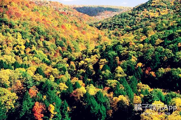 为了治理雾霾,马云花了1.4亿买了一片113平方公里的森林