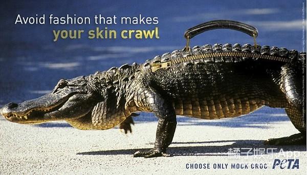 为了呼吁大家拒绝鳄鱼皮制品   动物保护组织给贝嫂做了一只仿皮包包