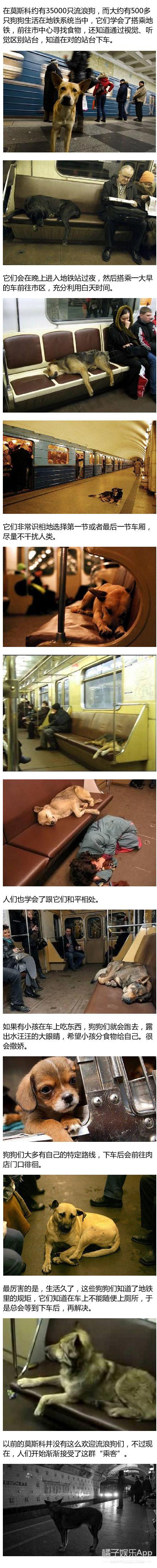 莫斯科竟然有500只流浪狗生活在地铁系统