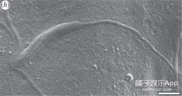 哦买噶!世界上最古老的精子在南极被发现!