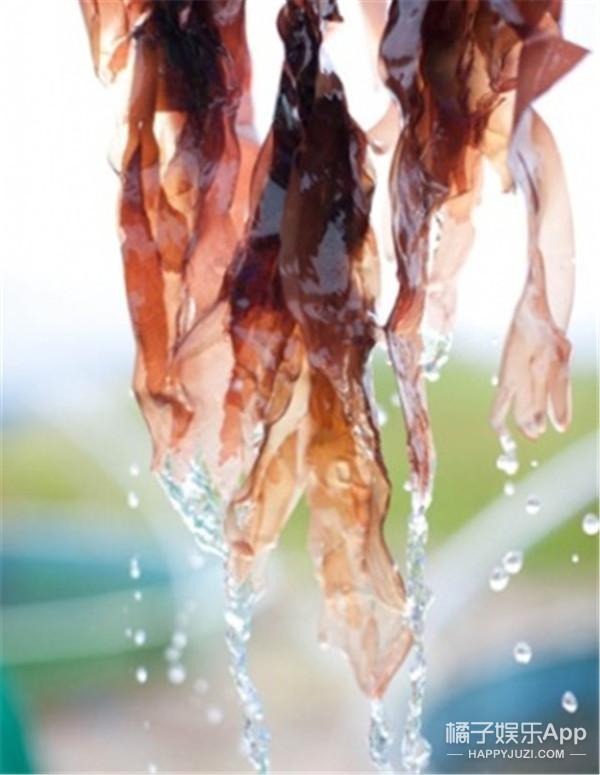 胖子福音!低热量高营养还是培根味的食用海藻诞生了