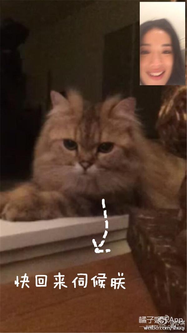 这年头,能跟猫视频聊天的只有舒淇了