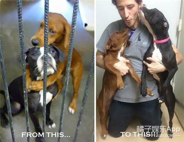 两只马上被安乐死的狗狗做出惊人举动,这竟然救了他们一命!