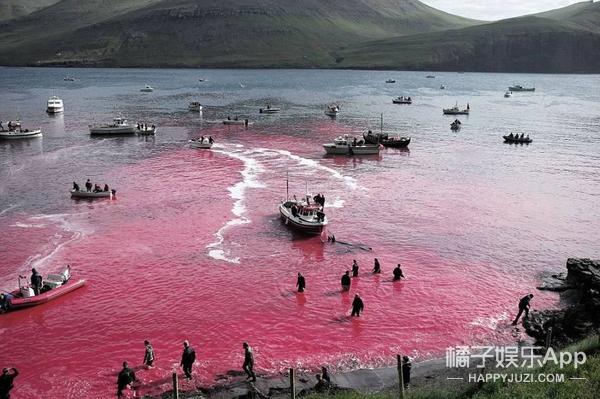 当世界都在为那死去的250头鲸鱼愤怒 这个男孩让我们重新相信爱