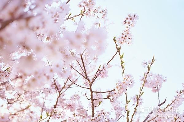 《小森林·冬春篇》:爱和生活都藏在一蔬一饭之间