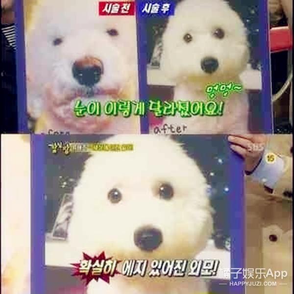 韩国开始给狗整容,包括抽脂 开眼角 打肉毒杆菌