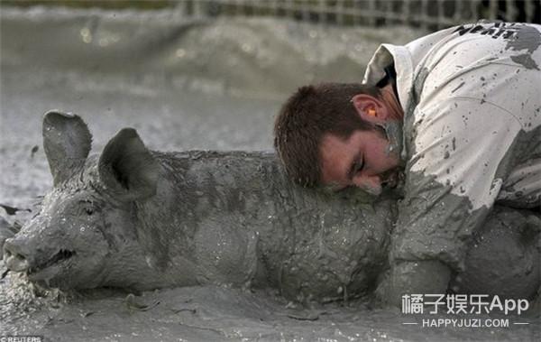 加拿大把猪灌醉再活捉,结果被国际动物组织告了