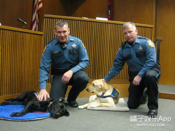 这些狗狗出现在冷酷的法庭上,让一切都温暖起来了...