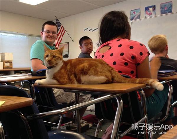 这只猫天天蹭课,终于让学校给它办了学生证!