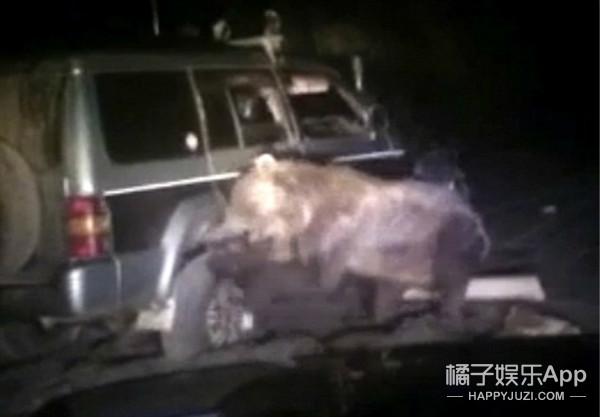 惨不忍睹!棕熊被俄变态司机来回碾压八次,挣脱后疯狂报复