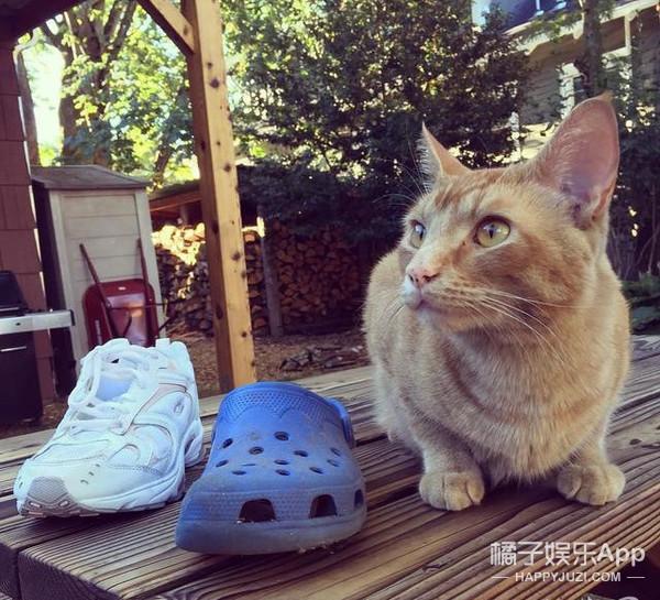 喵星人大盗!千万别和这只猫做邻居!