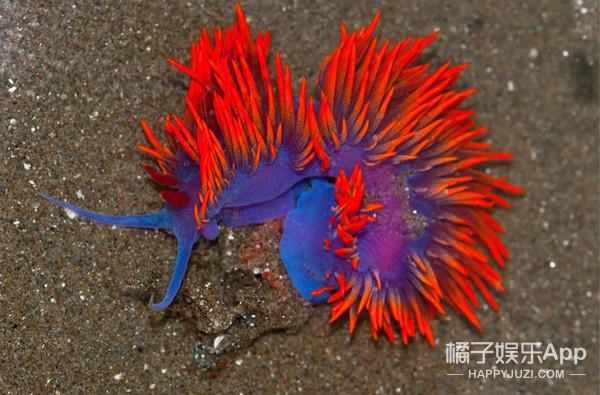 外星人已经来地球了?看看这15个长相奇葩的海洋生物