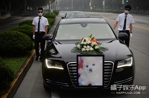没见过!一只狗的豪华葬礼!