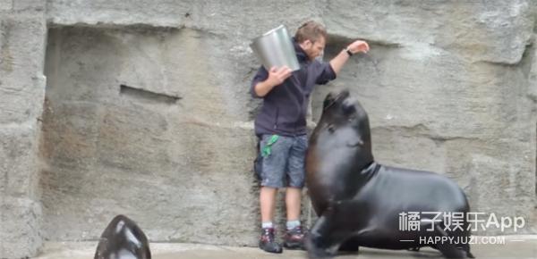 """任性海狮要吃鱼,强行""""壁咚""""饲养员"""