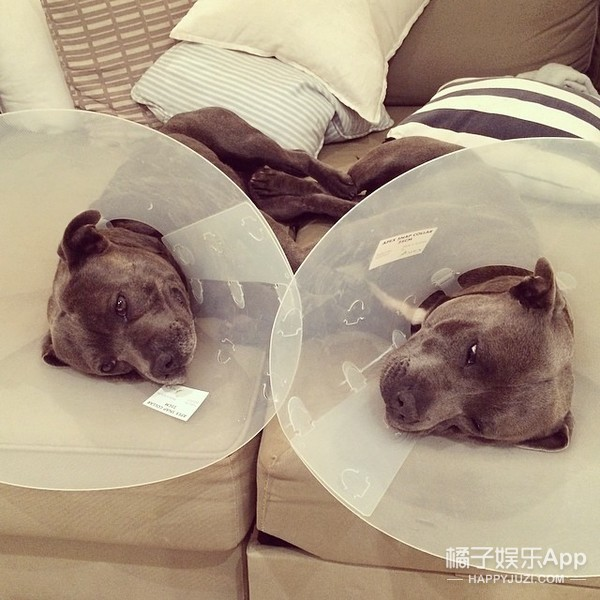 一对好基友!这两只狗狗可能是世界上关系最铁的兄弟了