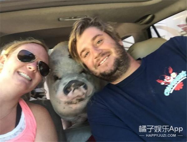 一只环游世界的猪,主人为它把飞机都包了!
