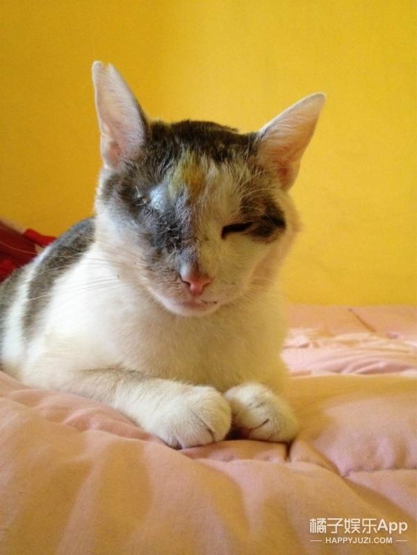 被残忍摘除一个眼球的猫咪,最后得到了一个最温暖的结局...