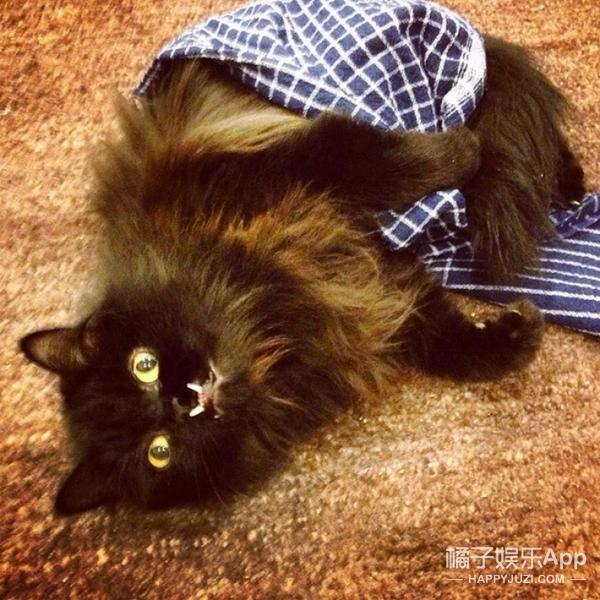 这只猫咪有两颗奇怪的尖牙,却圈了无数的粉,更拯救了无数的同伴