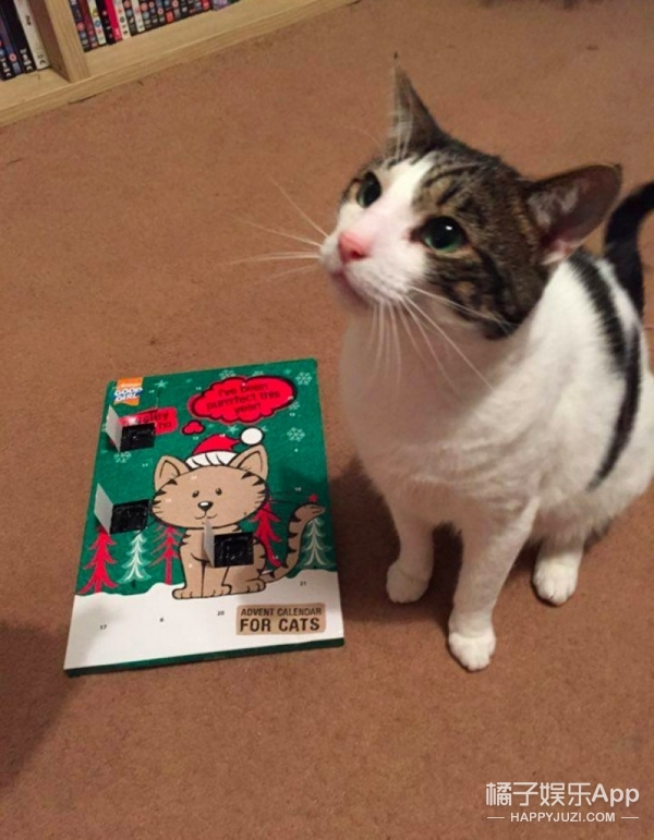 喵星人收到圣诞礼物,因为没身份证无法签收包裹…