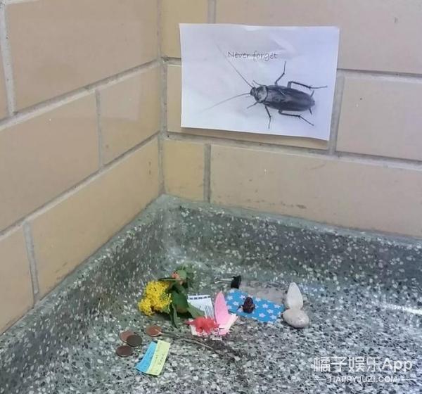 """美国一只蟑螂死了,于是人们给它办了场特别的""""葬礼""""!"""
