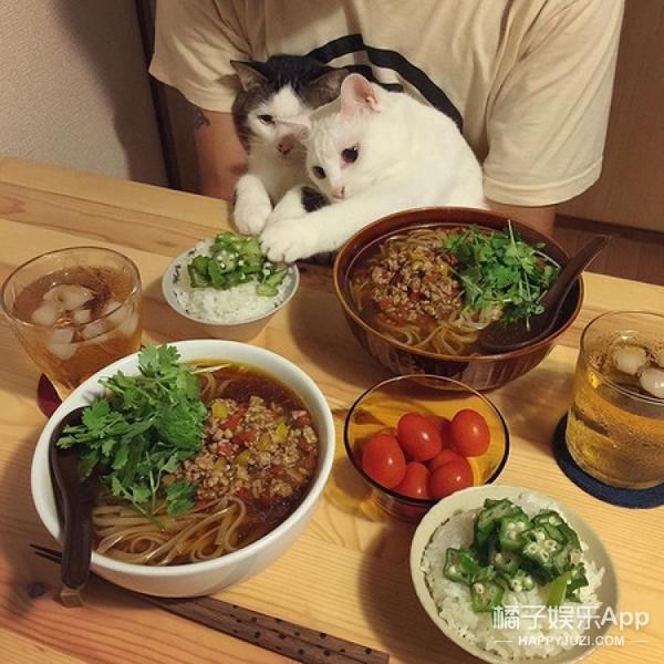 【萌宠】让喵星人体验一下能看不能吃是什么赶脚!