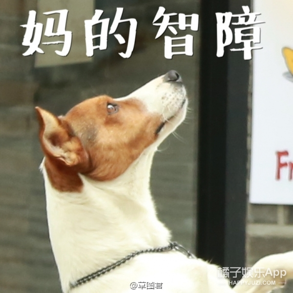 笑cry!别人到中国撩妹,胡歌到韩国撩狗...