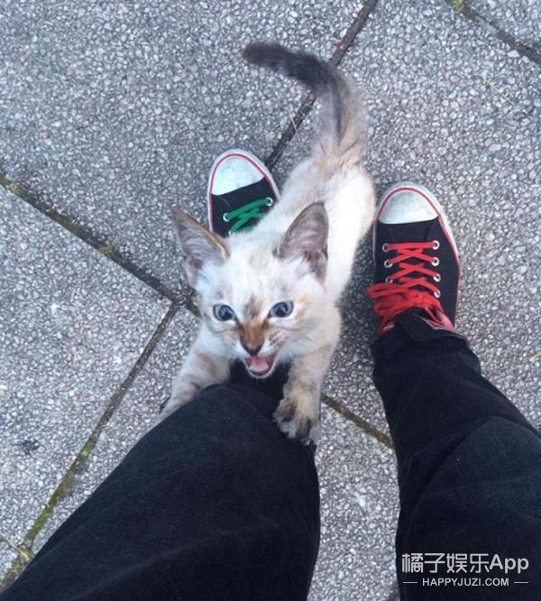 【萌宠】喵星人在公园里溜达时,竟找到了这辈子的主人!